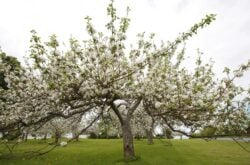 20 Reasons to Visit Annapolis Valley During Apple Blossom Festival