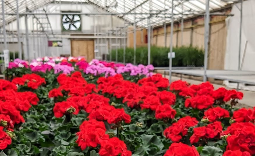 Garden Centres in and Around Calgary
