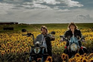 Sunflower Fields and Sunflower Mazes to Visit in Alberta