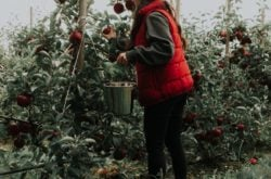U-Picks Apple Orchards in Nova Scotia