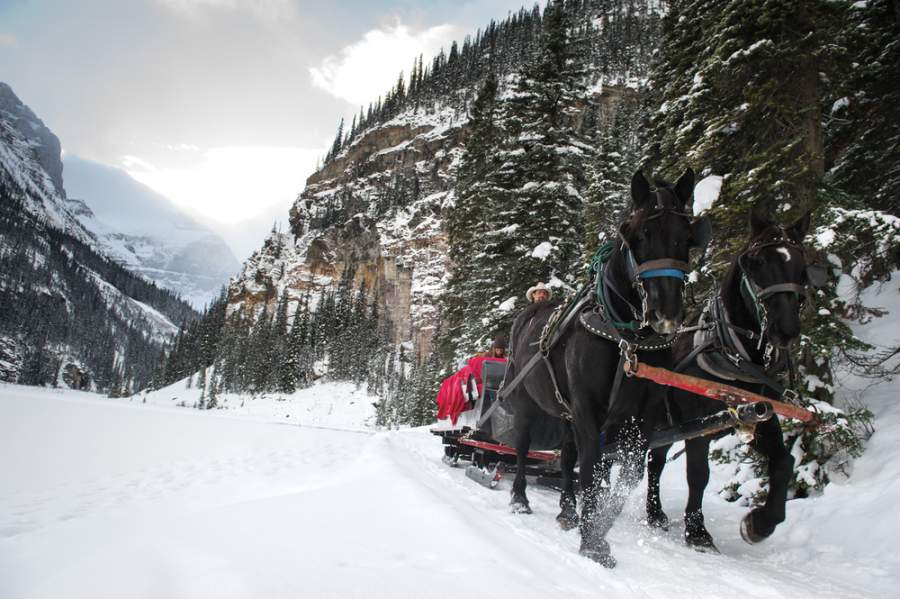 Sleigh Rides in Banff National Park